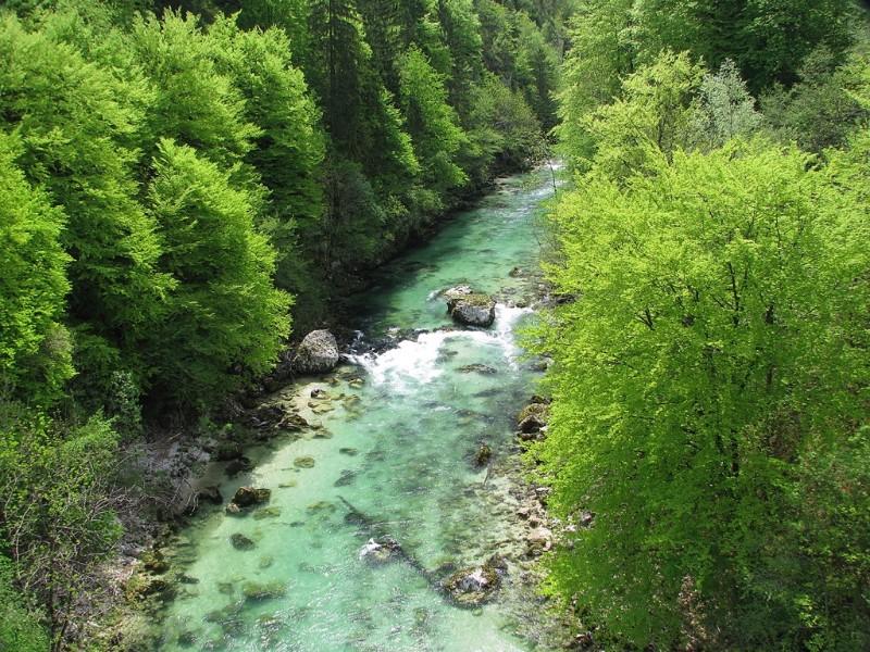 Sava-Bohinjka-poleti